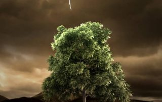 Tree and Lightening in a Barren Landscape