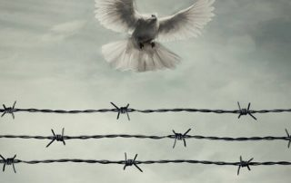 Dove, Rock, and Barbed Wire